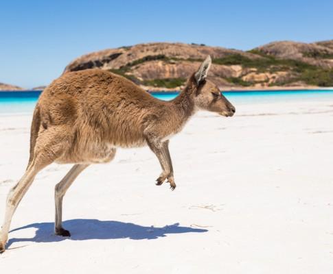 Tour Esplorando l'Australia
