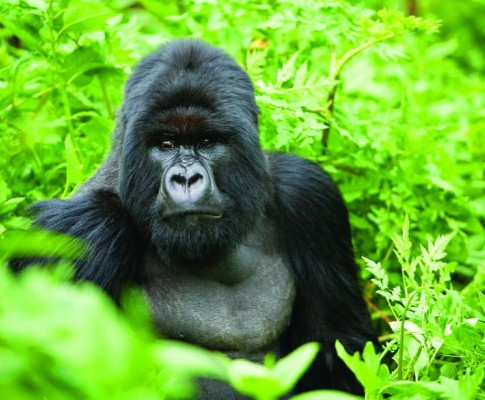 Tour Ruanda & Seychelles
